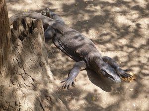 506 - crosiere parc national Komodo (20) (800x600)