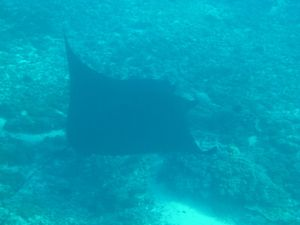 508 - croisiere snorkeling manta point (20) (800x600)