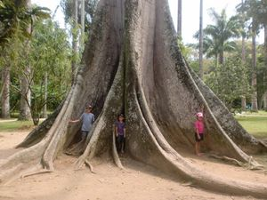 Le coin des enfants tour du monde famille for Boulevard du jardin botanique 20 22