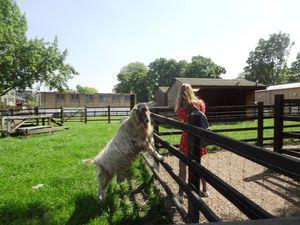 Una visita alla Stepney City Farm. La fattoria dello zio Tobia nel cuore dell'East End