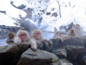 Jigokudani_hotspring_in_Nagano_Japan_001.jpg