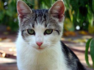 chaton-printemps8.jpg