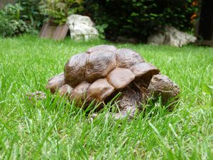Mme Tortue (3)