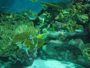 aquarium 6957