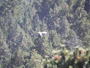 vautours-et-troupeau-001.JPG