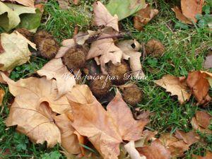 sol d'automne