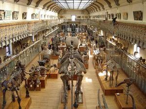 museum-histoire-naturelle.jpg