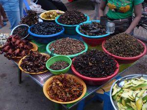 vente rue -insectes
