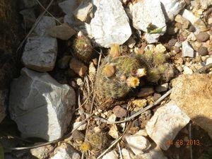 Angolo roccioso fiori