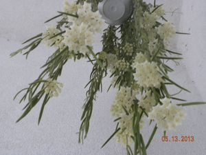 fiori linearis