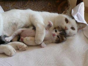 chatons-amour-aut...892277-48-d3659a