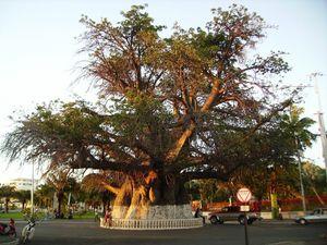 1-baobab6.jpg
