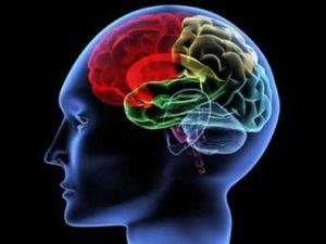 brainq.jpg