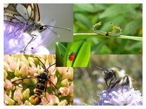 montage-insectes-BB-sign-red.jpg