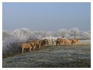 vaches-jardin-givre-BB-sign-red.jpg