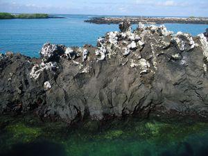 3eme j Isla Isabela - ile volcanique -Tintorenas (15)