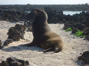 3eme j Isla Isabela - ile volcanique -Tintorenas (23)