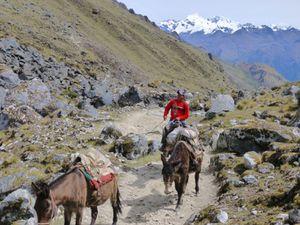 Trek Salkantay - 2ème jour (46)