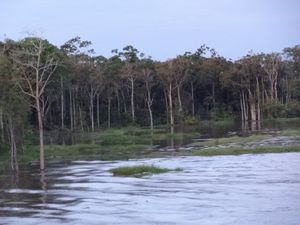 002 l'Amazone
