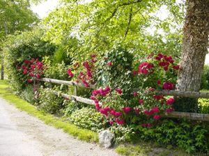 La Petite Clavelie - Les roses encadrent la barrière