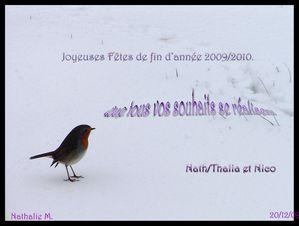 rouge-gorge-Noel2009.jpg