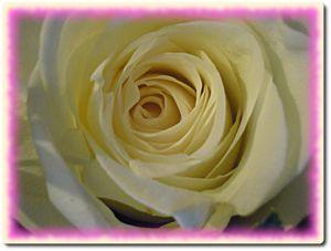 bouquet-fleurs-1.JPG