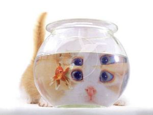 Ectac.Chat Poisson rouge.03