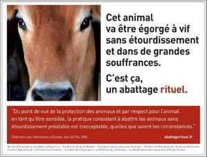 campagne mars 2011 (2)