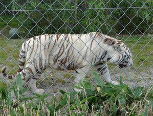 zoo asson 013
