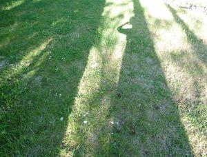 Mon-double-est-un-arbre.JPG