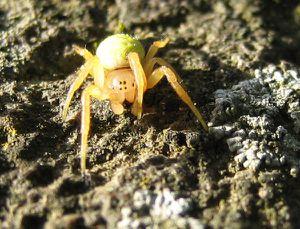 7 petite araignée (2)
