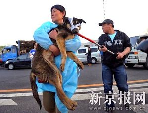 sauvetage chiens en chine urgence animaux overblog