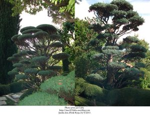 jardin zen 6