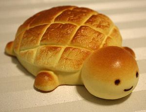 coquille-tortue