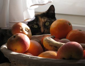 5-fruits-et-legumes--jpg