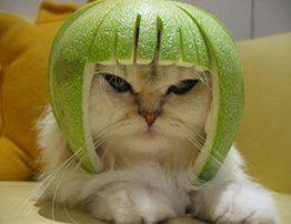 Chat-melon.jpg