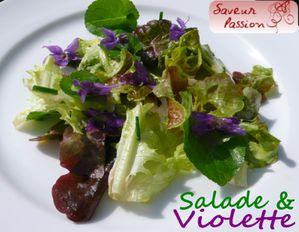 saladeviolette1.jpg