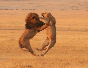 good_evil_lions.jpg