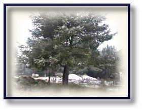 neige 2012 2