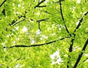 vert-tendre.jpg