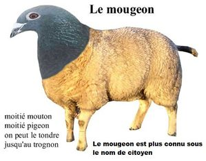 mougeon-copie-1.jpg