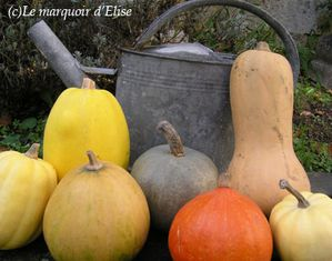 Courges 1