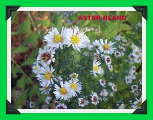 ASTERS (9)