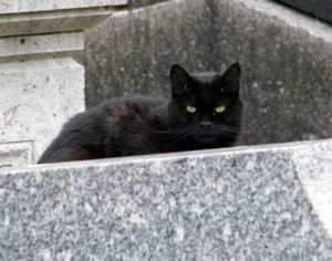 cimetière Mont. 3 074