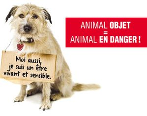 animaux-petition-30M-d-amis-2013.jpg