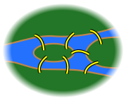 179px-7 bridges svg