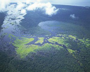 pays amazonie forêt
