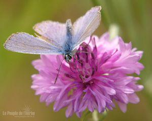 argus-bleu-1280x1024.jpg
