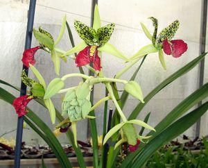 orchidees-020.jpg