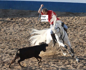 CORRIDA-A-CHEVAL-HOMME.png